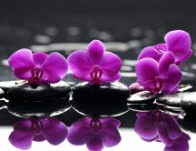 Beautiful pink double flowers in water reflection