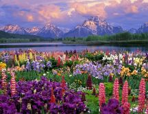 Wonderful colors of spring - HD nature wallpaper