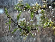 Beautiful rainy spring day - trees in bloom