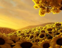 Beautiful field full of golden sunflowers - HD wallpaper