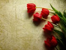 Red tulips on the floor - HD wallpaper