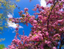 Little pink flowers on the tree - magic spring time