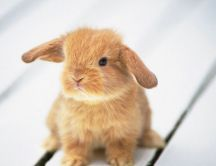 Little brown rabbit on the floor - HD wallpaper