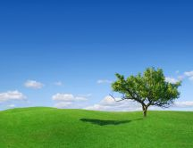 Beautiful tree on a green meadow - HD natural wallpaper