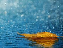 Autumn leaf in the fresh rain water