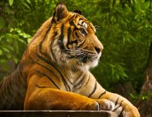 Beautiful tiger at photo-shoot - HD animal wallpaper