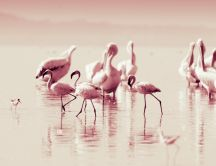 Wonderful Flamingoes - pink bird with big legs