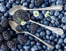 Hundreds of blueberries - Fruits full of vitamins