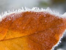 Beautiful autumn leaf covered with ice