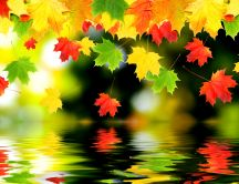 Artistic autumn wallpaper - leaves in the mirror