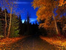 Old country road in the middle of nature - beautiful autumn