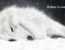 Beautiful white dog in the winter - Game of Thrones