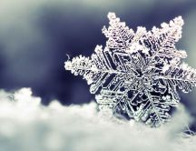 Frozen snowflake - beautiful winter season