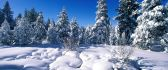 Shiny snow in the sunlight - HD winter wallpaper
