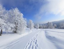 Footprints in the snow - HD winter wallpaper