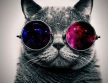 Abstract wallpapers - Retro glasses and a grey cat