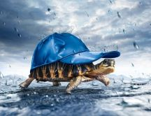 New umbrella for the turtles - blue cap - HD wallpaper
