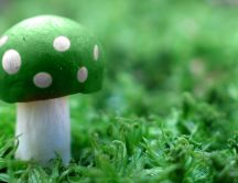 Poison green mushroom on the fresh grass of spring