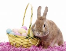 Sweet grey bunny and Easter Eggs - HD wallpaper