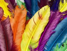 Many colourful feathers