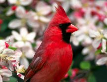 Red bird between white flowers