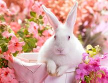 White rabbit with red eyes in a basket between pink flowers