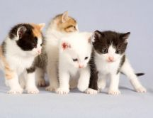 Four little cute cats - Animals Wallpaper