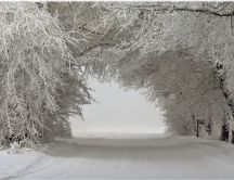 A tunnel of trees with snow - White tunnel