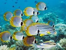 Beautiful yellow and striped fish in water