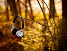 Headphones hanging on a branch in the forest