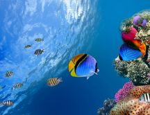 Wonderful coloured fish and sea life