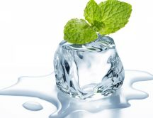 A mint on the ice cube - Fresh HD wallpaper