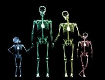 Family skeletons in different colors on a black space