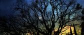 Tree branches in the moonlight - Night landscape