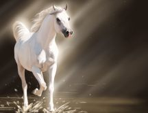 A beautiful white young horse in water