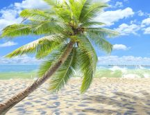 Sunny tropical beach - Green palm on sea shore