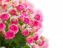 Gorgeous pink roses bouquet - Beautiful flowers