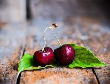 Two fresh cherries on two green leaves