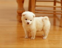 Lovely white puppy on floor - Sweet dog