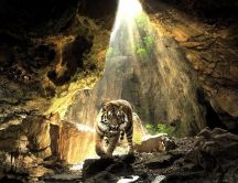 A big tiger in a cave - Wild animal wallpaper