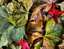 Many colorful leaves - Autumn wallpaper