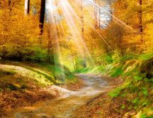 The sun rays penetrate on the path from the forest