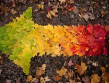 An arrow made of many colorful leaves