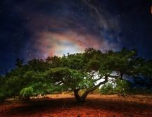 Giant tree under moonlight in night
