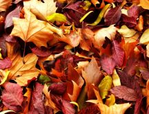 A carpet of colorful leaves - Autumn time