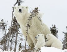 Polar bear family in forest - Happy family