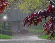 Trees with red leaves in the rain - Autumn day