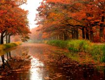 River full with autumn leaves - Mirror on the water