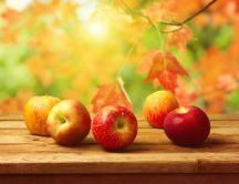 Delicious red apples - Autumn season