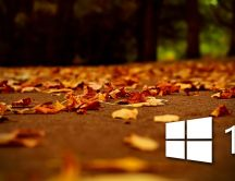 White windows 10 logo on autumn red leaves